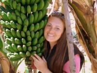 Bananenanbau