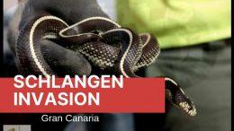 Schlangen-Plage