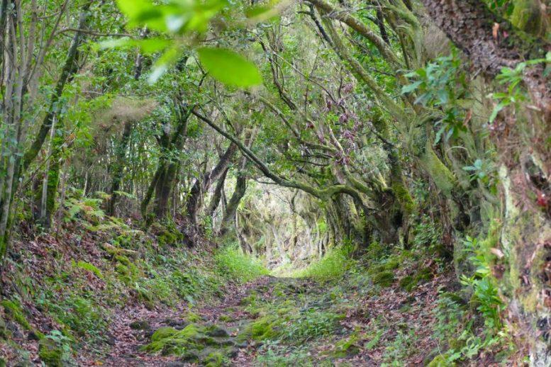 Wanderweg - Camino Real