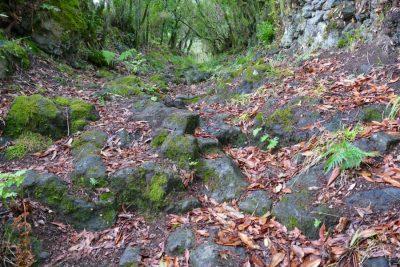 Gepflasterter Boden