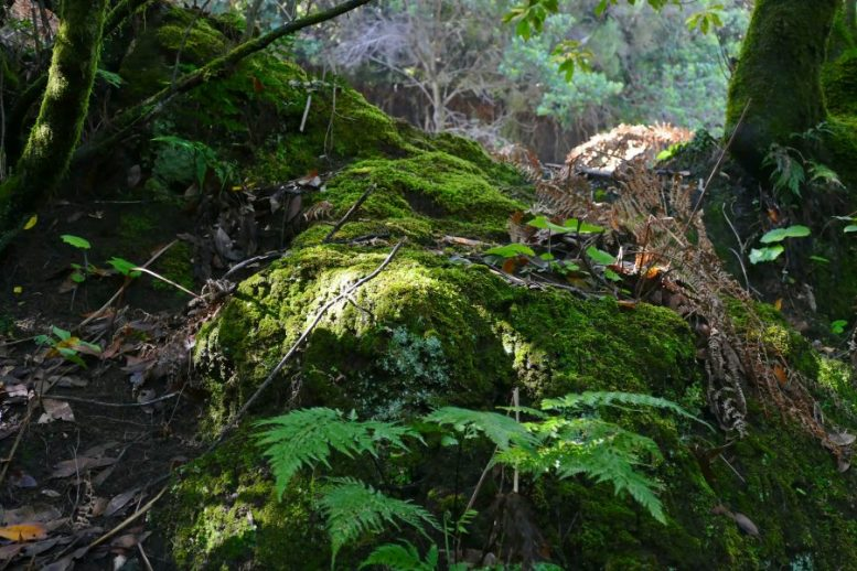 Bemooste Steine - Magische Wälder