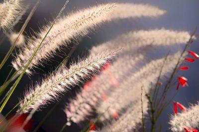 Grashalme - Gras wachsen