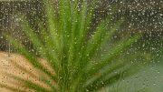 Niederschlag - Platzregen