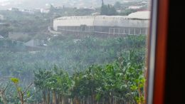 Bananen - Sintflutartige Regenfälle