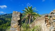 Palmen - Jahresrückblick